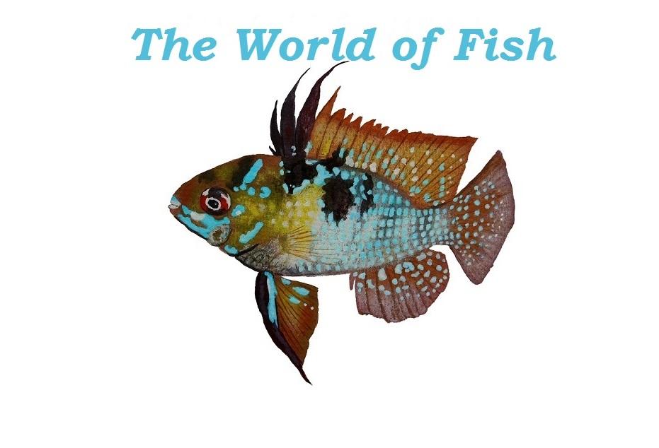 The World Of Fish
